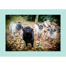 Card - Blank (Autum Leaves Pug Group)