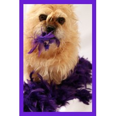 Card - Blank (Edie Purple Boa)