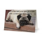 Pet Sympathy Card Fred