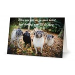 Pet Sympathy Card Group