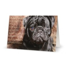 Pet Sympathy Card Percy
