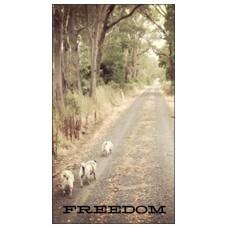 Magnet - Freedom
